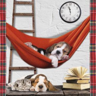 plaid cuccioli cani beagle