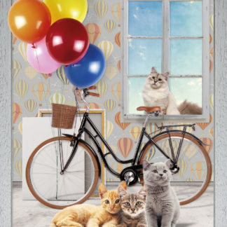 plaid pile bicicletta gatti